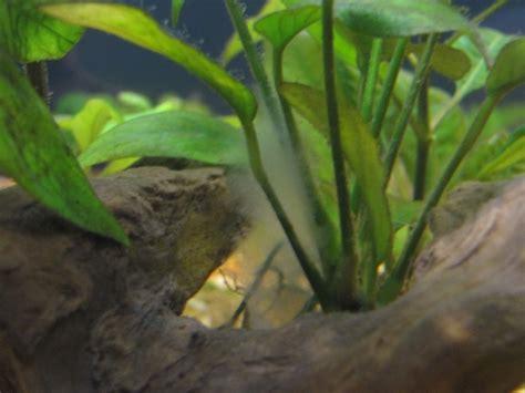 aquarium eau douce blanche