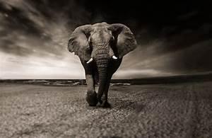 Tierbilder Schwarz Weiß : schwarz weiss kostenlose bilder auf pixabay ~ Markanthonyermac.com Haus und Dekorationen