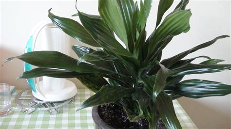 file plante verte jpg wikimedia commons