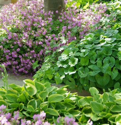 Stauden Grundlagenwissen Für Deine Gartengestaltung