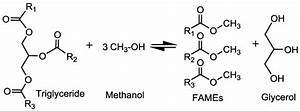 Reaction between triglyceride and methanol to generate ...