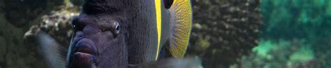 horaires de l aquarium de vannes morbihan en bretagne