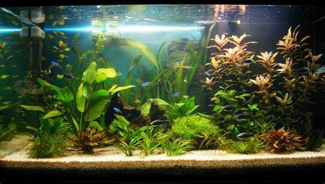 aquarium eau douce quels poissons