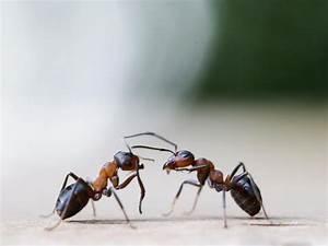 Hilft Mehl Gegen Ameisen : kreide thymian und zitrone das hilft gegen ameisen im haus n ~ Whattoseeinmadrid.com Haus und Dekorationen