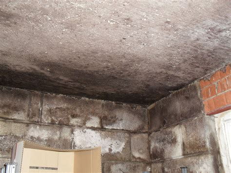 Crawl Space Cleanup Toronto, Montreal Ottawa  Water in a