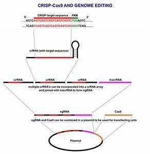 A pinch of salt for CRISPR research - Mapping Ignorance
