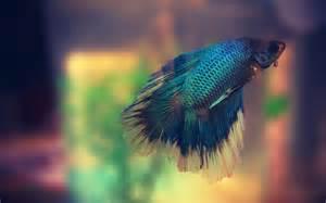 fonds d 233 cran aquarium poissons gratuits