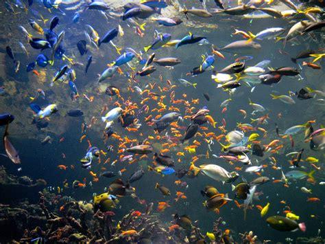 all fish aquarium 2017 fish tank maintenance