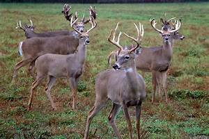 CWD spreads on deer and elk farms as Wisconsin's control ...