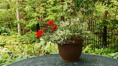Container Garden Recipes For Shade  Better Homes & Gardens