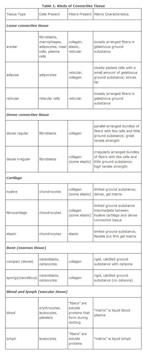 Connective Tissue  Lovejoy Anatomy And Physiology