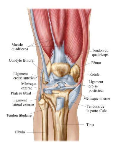 l 233 sion m 233 niscale interne ou externe du genou et ligamentaire
