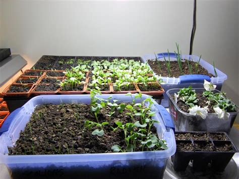 5 Easy Ways To Make Indoor Hydroponic Garden For Fish Tanks