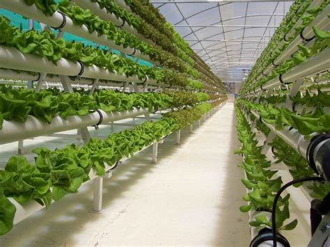 hydroponics what is it and what is it actually for hg