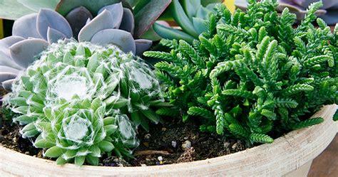 1 garden planting ideas find indoor garden planting ideas