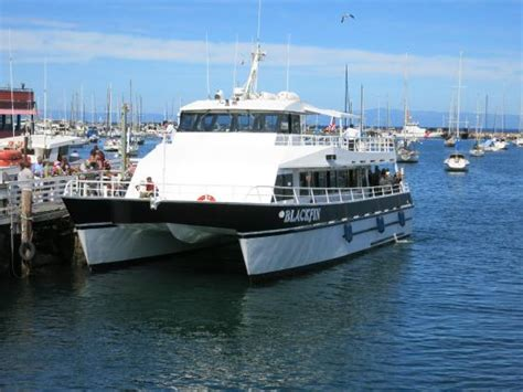 Monterey Whale Watching Boats by Blackfin Catamaran Picture Of Monterey Bay Whale Watch