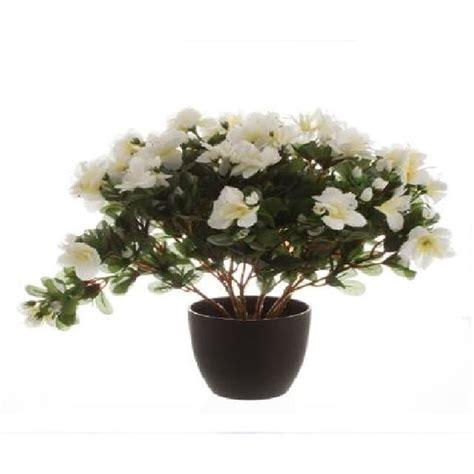 entretien rhododendron en pot 28 images entretenir une azal 233 e s 233 cateur fourchettes