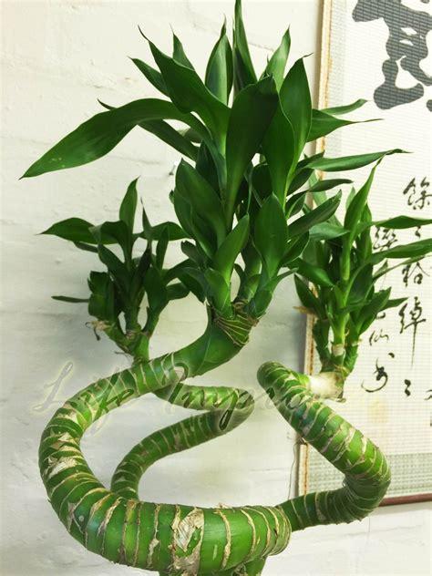 plants in bathroom for feng shui bathroom trends