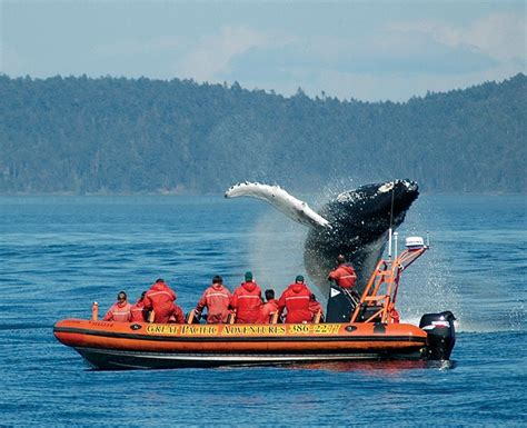 Zodiac Boat Whale Watching Vancouver by Whale Watching In Bc Vancouver Pinterest