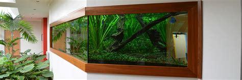 fabrication installation et entretien d aquariums et viviers aquarium location services