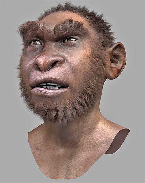 Homo Erectus  Homo Ergaster