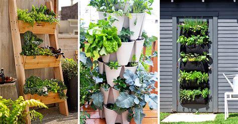 Vertical Vegetable Garden Ideas For Beginners