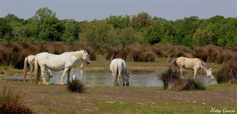 photos les marais du vigueirat