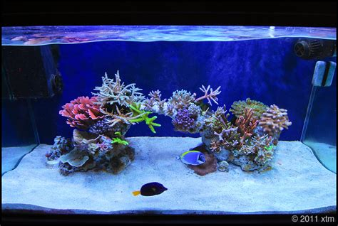 minimalist aquascaping page 47 reef central community nano reef tank