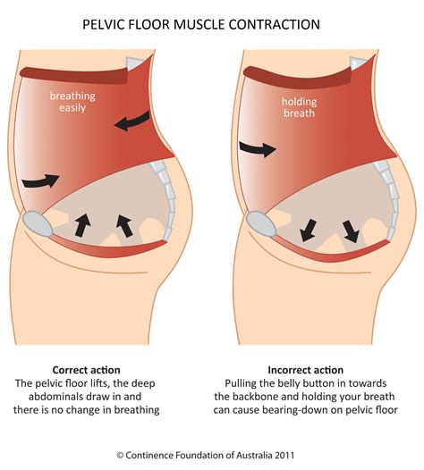 pelvic floor in s outs gfit