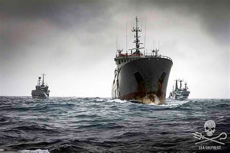 Ship Follow The Trade by One Of The World S Most Notorious Illegal Fishing Crews Is