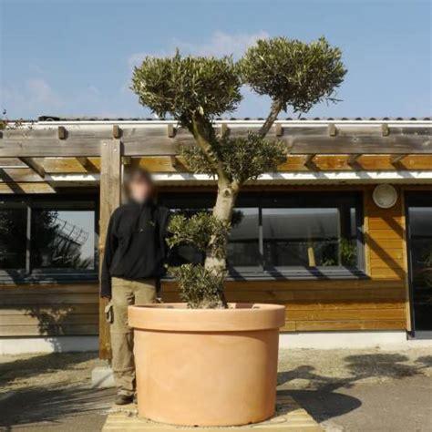 pot g 233 ant pour arbre d 105 x h 70 cm vente pot g 233 ant pour arbre d 105 x h 70 cm