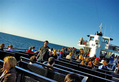 Whale Watching Boat Tours San Diego Ca by Flagship Cruises Whale Watching Birch Aquarium San