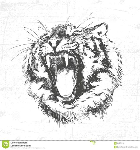 Tiger Head Silhouette  Vector Illustration Isolated On White Background Stock Vector Image