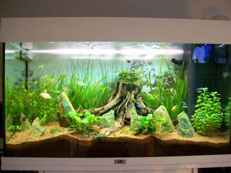mon bac plant 233