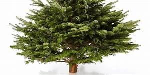 Kratzbaum Echter Baum : echter lorbeerbaum kaufen lorbeer schneiden lorbeer lorbeerbaum laurus nobilis lorbeerbaum ~ Markanthonyermac.com Haus und Dekorationen