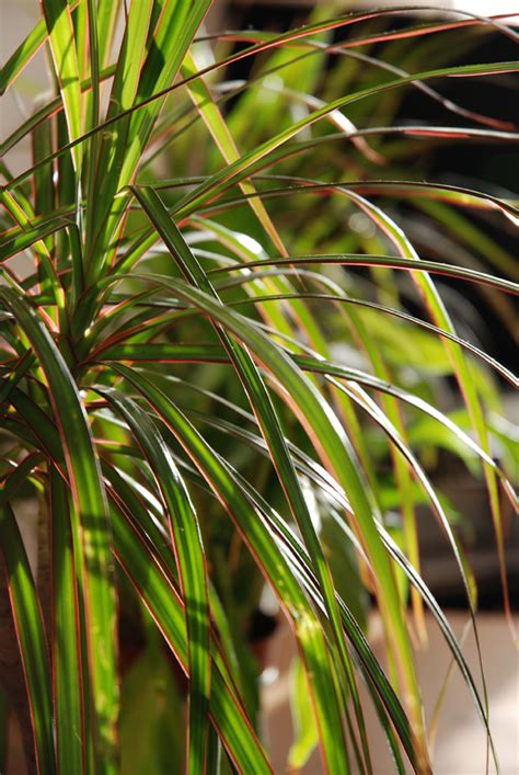 contre la pollution int 233 rieure adoptez les plantes vertes n 233 oplan 232 te