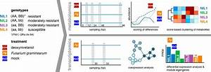 Joint Transcriptomic and Metabolomic Analyses Reveal ...
