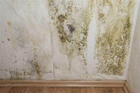 peinture anti moisissure prix comment la choisir et l appliquer