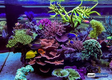 The Supernatural Reef Tank Of Seabox Aquarium  Reef. Empty Frames. Modern Chesterfield Sofa. French Country Table. Houston Architecture. Havertys Bedroom Furniture. Round Table 60 Inch. Interior Design Boston. Lowes Auburn Maine