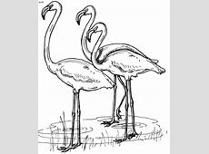 Bahamas National Symbols Coloring Pages Coloring Pages