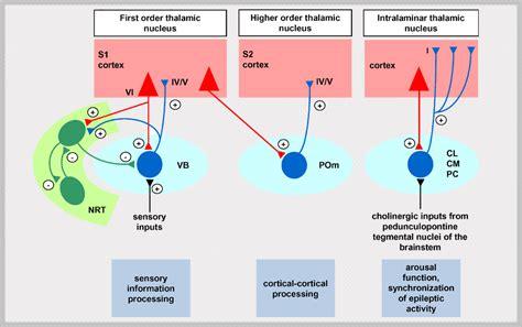 Sleep Wake Cycle by Thalamus And Extended Pathways Sleep Wake Cycle And