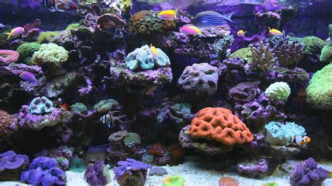 amazing marine aquarium screensaver