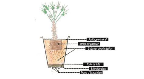 les palmiers inspirations desjardins