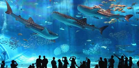 le plus grand aquarium du monde soonsoonsoon