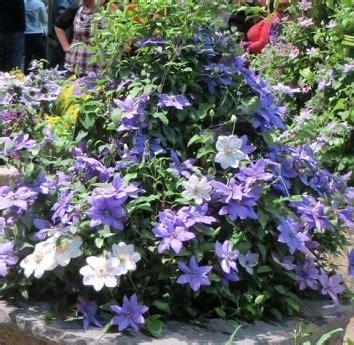 planting flowers tips in urdu growing flowers in pots