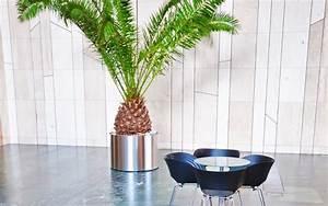 Palmen Für Die Wohnung : zimmerpalmen urlaubsstimmung f r die eigenen vier w nde ~ Markanthonyermac.com Haus und Dekorationen