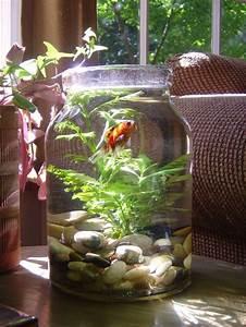 Coole Aquarium Deko : diy creative aquarium natural decorations for homes nationtrendz com ~ Markanthonyermac.com Haus und Dekorationen