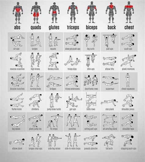 exercices musculation tuxboard