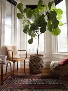 Große Zimmerpflanzen Pflegeleicht : pflegeleichte zimmerpflanzen die auch sehr frisch und sch n aussehen ~ Markanthonyermac.com Haus und Dekorationen