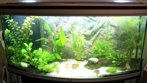 d 233 coration aquarium eau douce pas cher